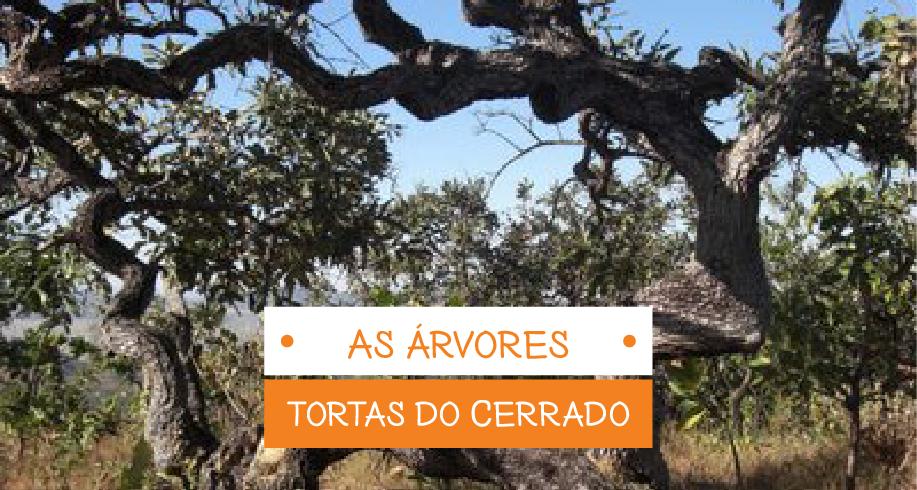 As árvores tortas do Cerrado